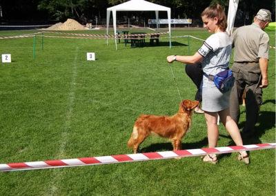 Wystawa Pies rasy Nova Scotia Duck Tolling Retriever