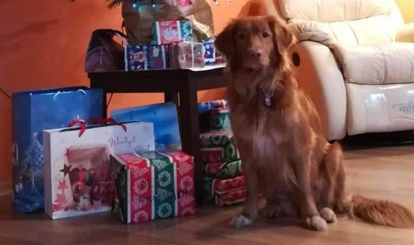 Życzenia Świąteczne i Noworoczne!